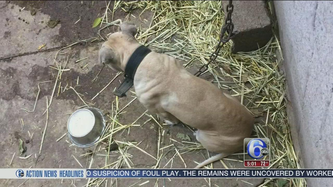 VIDEO: Dog fighting investigation