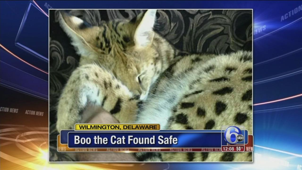 VIDEO: Boo the cat found safe