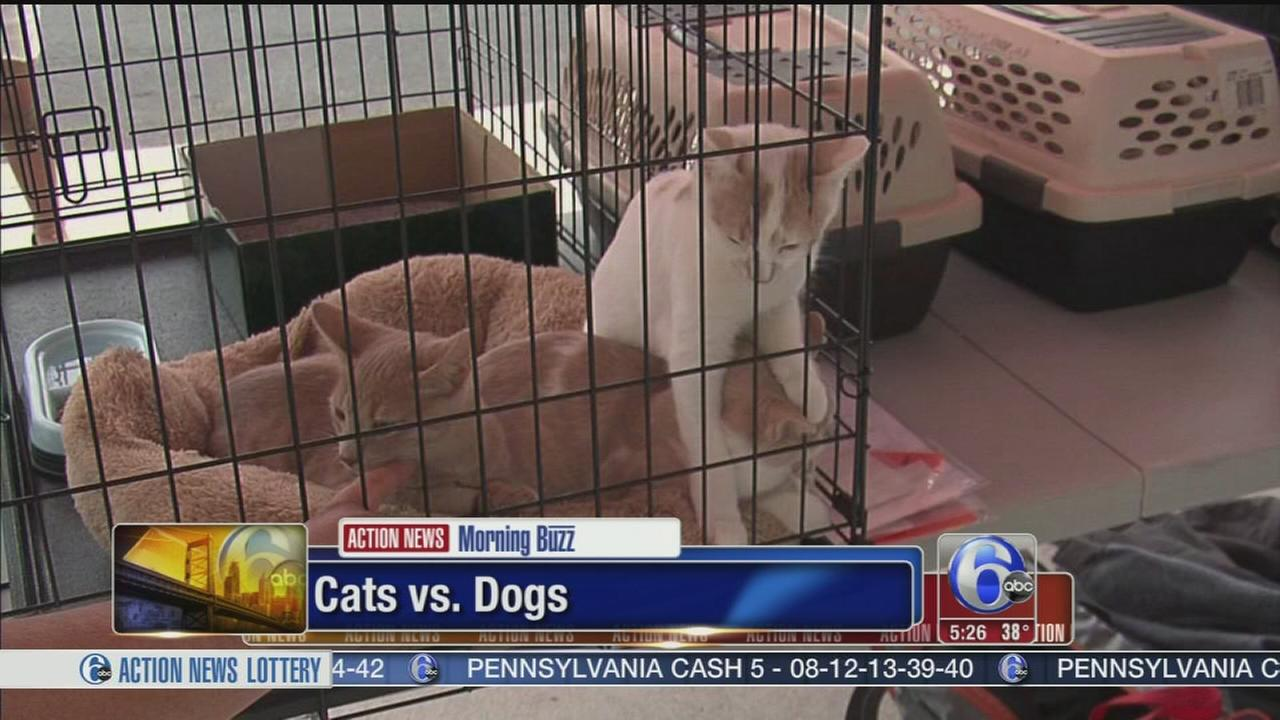 VIDEO: DNA study says cats are still wild