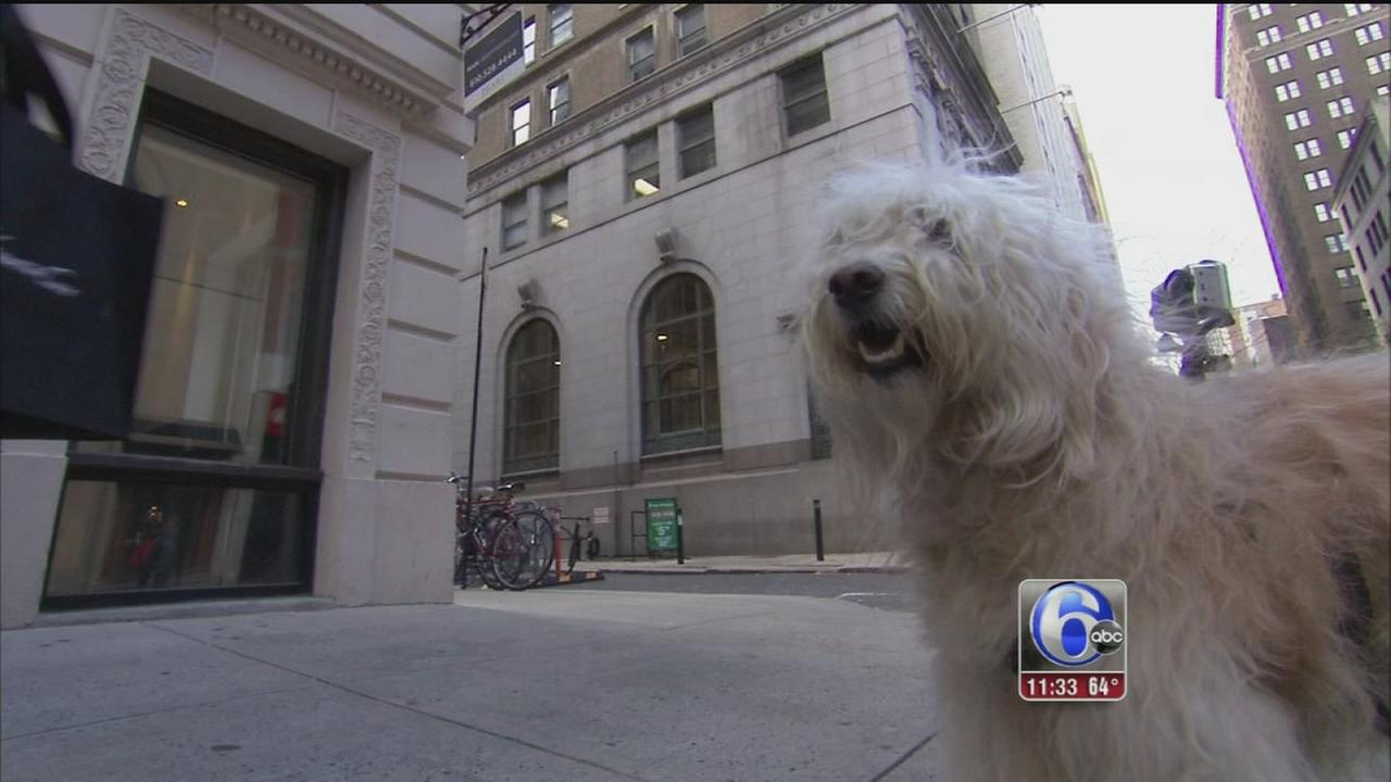 VIDEO: Pet friendliest places