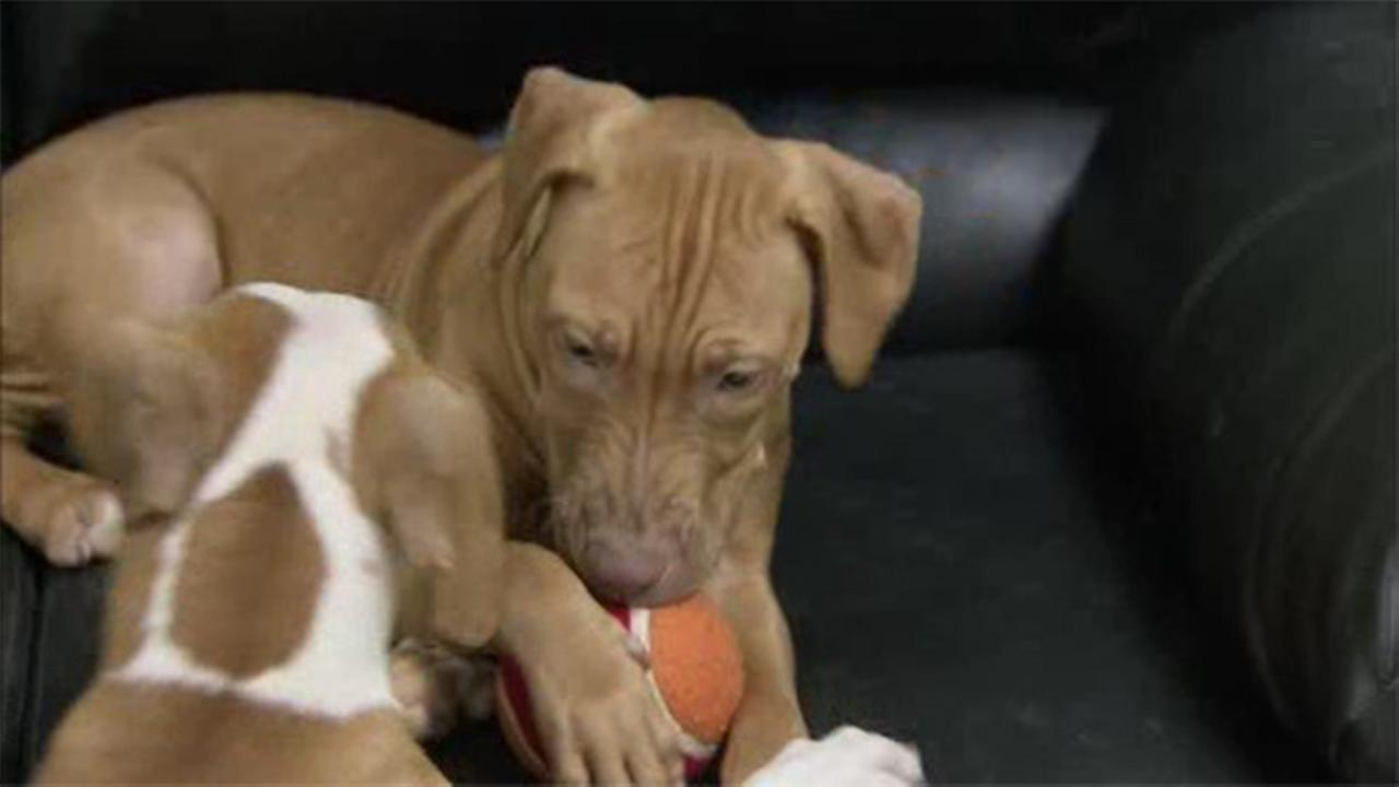 Rescued pups ready for homes