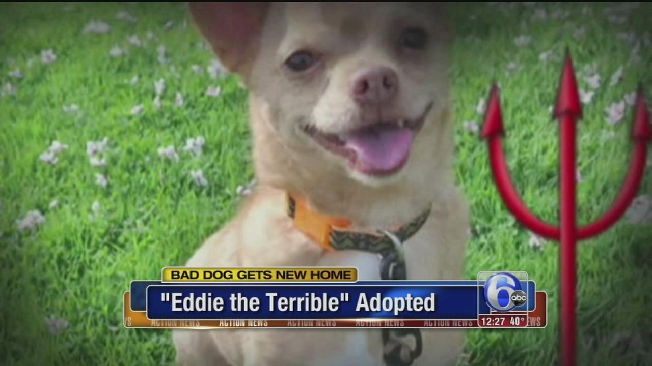 VIDEO: Eddie the Terrible finds a home