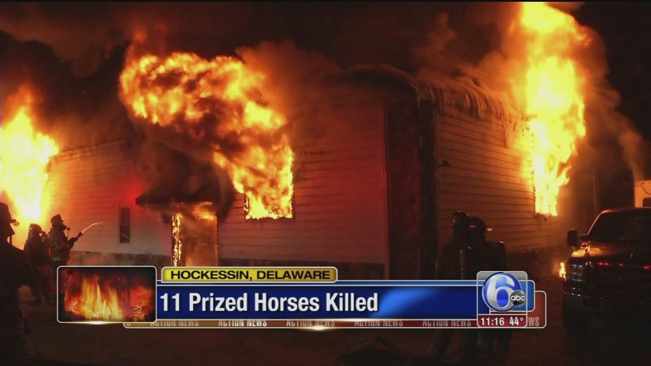 VIDEO: 11 prized horses killed