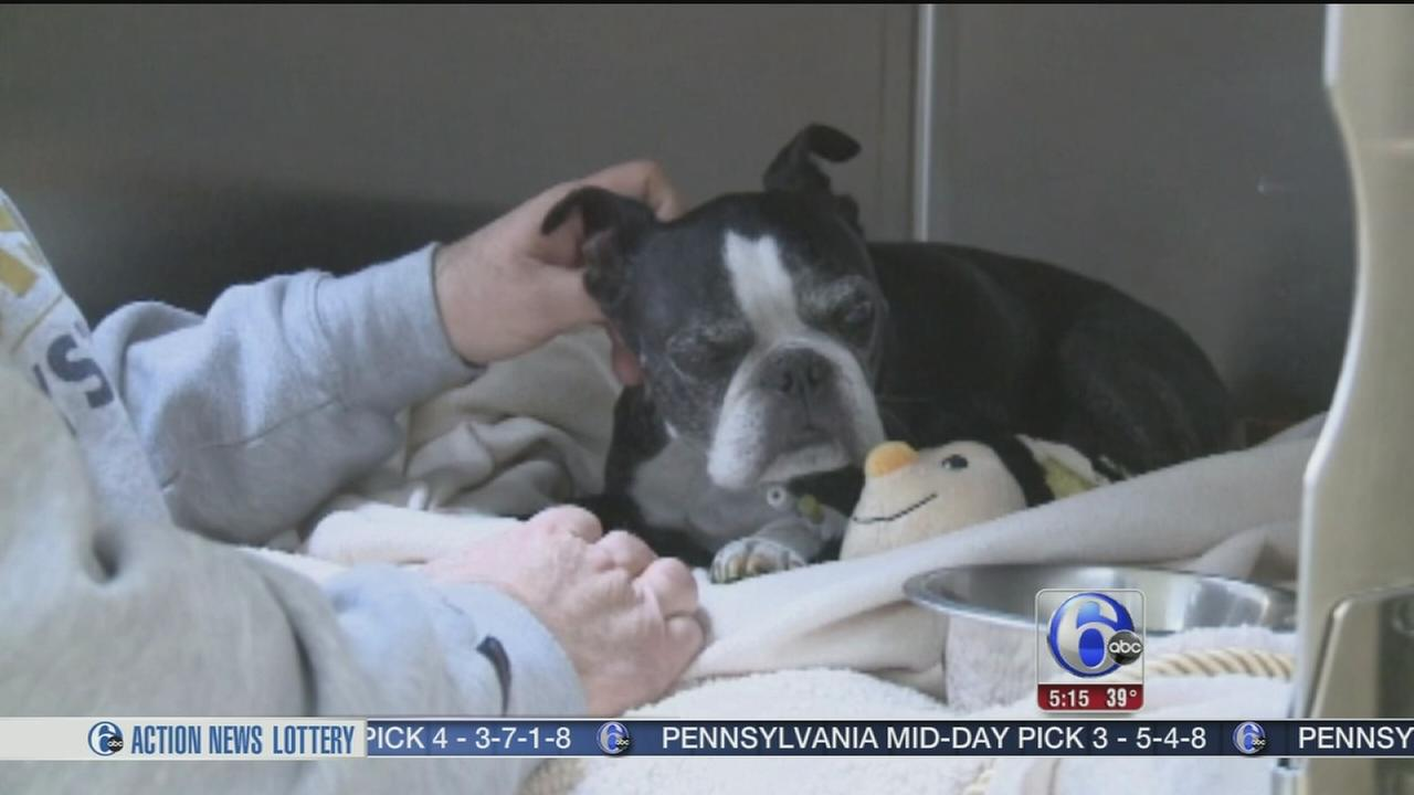 VIDEO: Dog with failing sight survives 15 foot fall