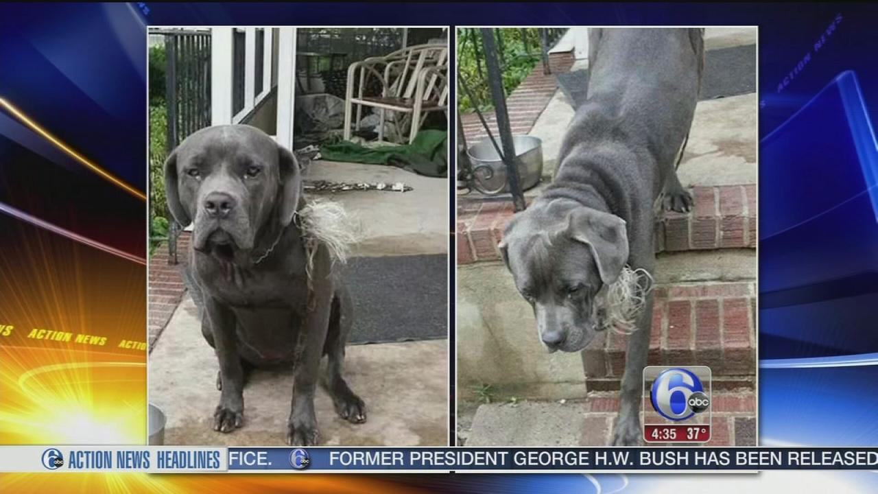 VIDEO: Elderly man pleads for help finding his beloved stolen dog