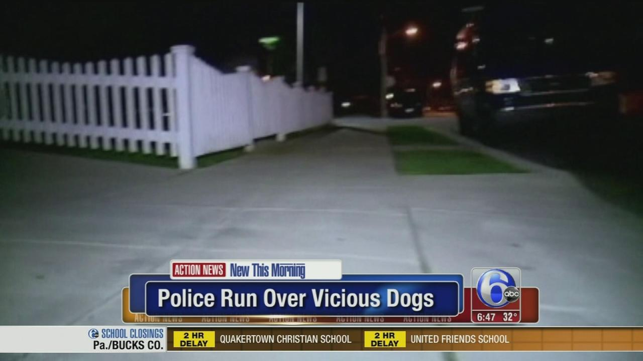 VIDEO: Police run over vicious dogs