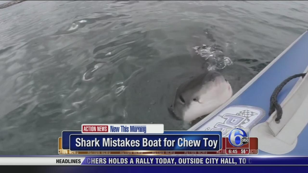 Shark Toys For Boys With Boats : Video shark uses boat as chew toy abc