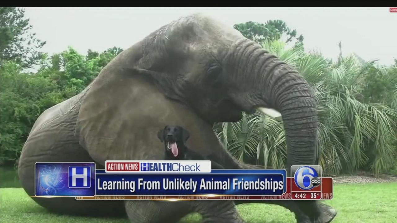 VIDEO: Unlikely animal friendships