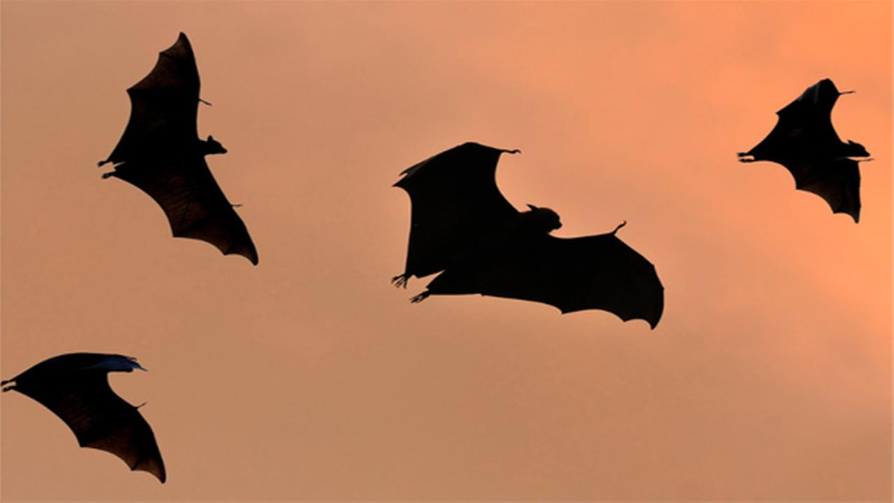 Bats cause courthouse chaos