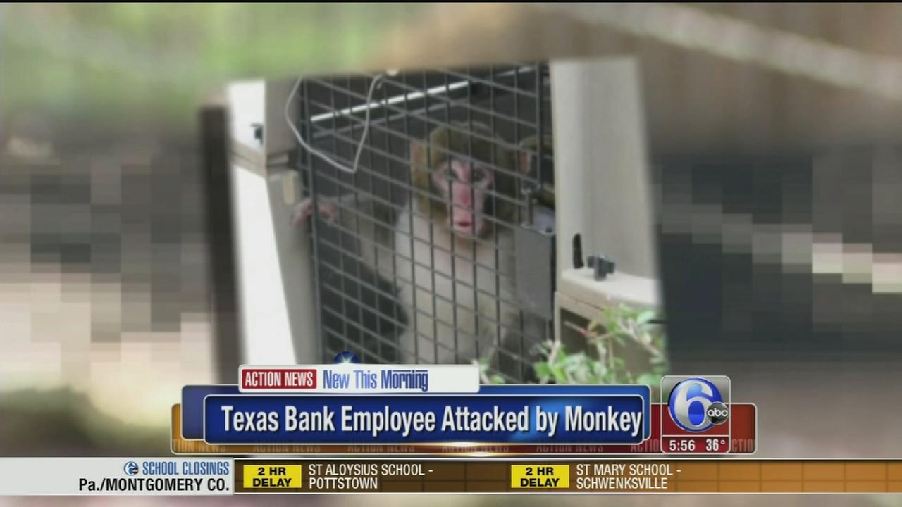VIDEO: Bank employee attacked by monkey
