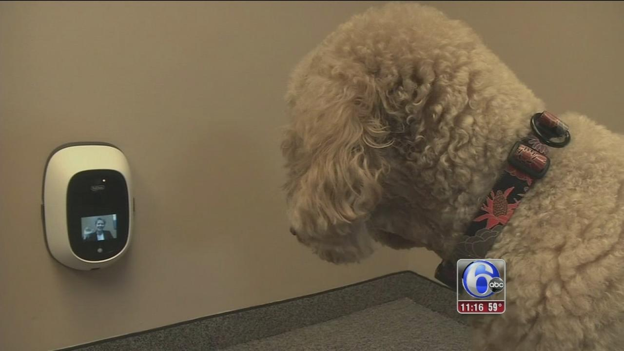 Devices help owners interact with pets while away