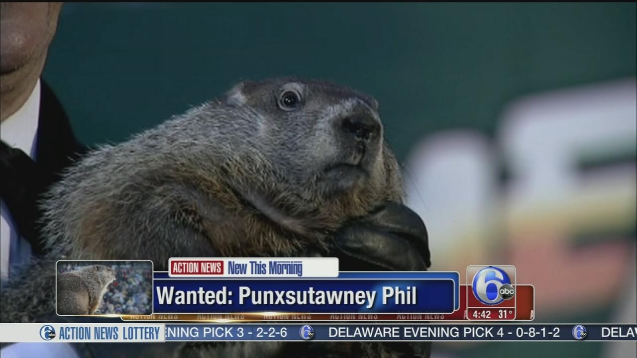 VIDEO: Warrant issued for Punxsutawney Phil