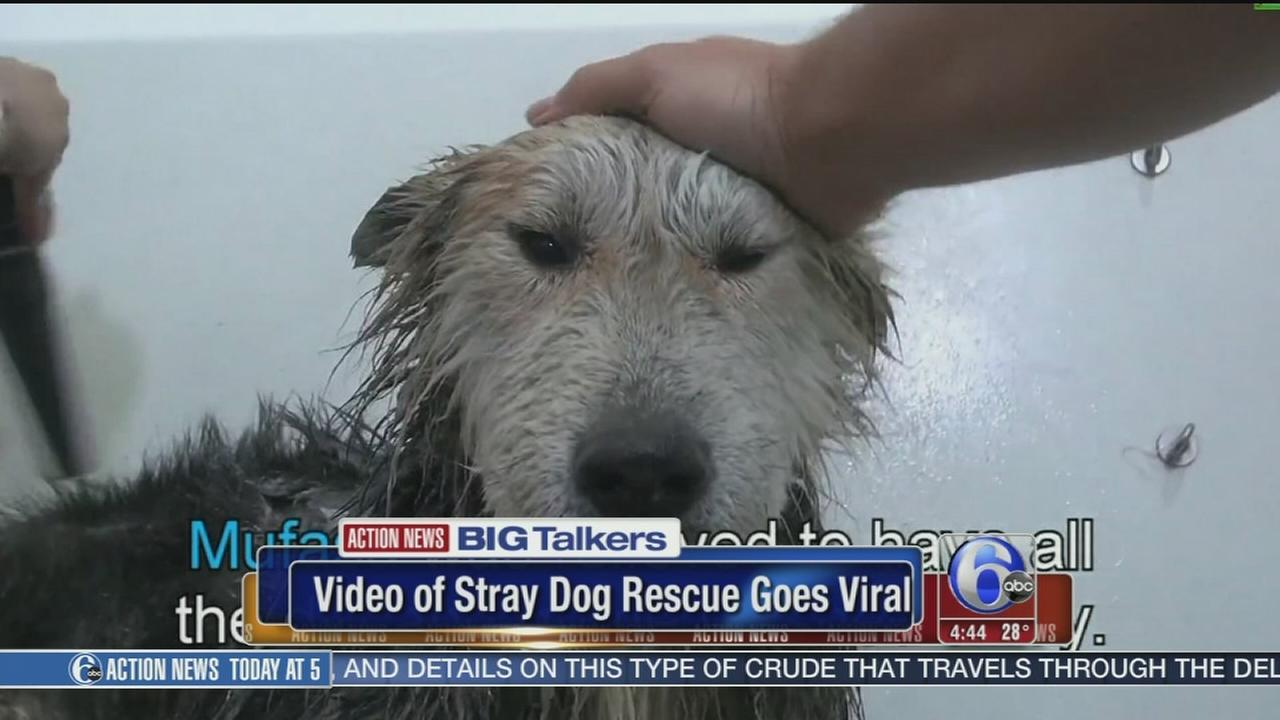VIDEO: Stray dog
