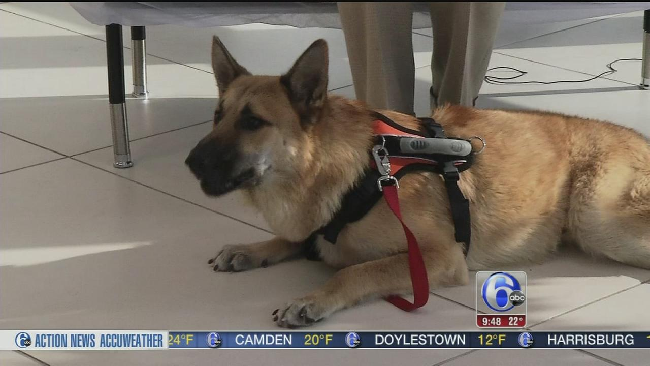 VIDEO: Shelter Me: The Rescue Express