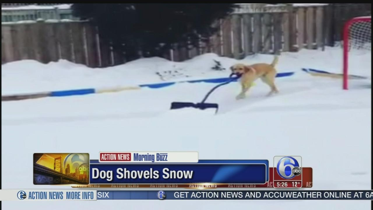 VIDEO: Dog shovels snow for owner