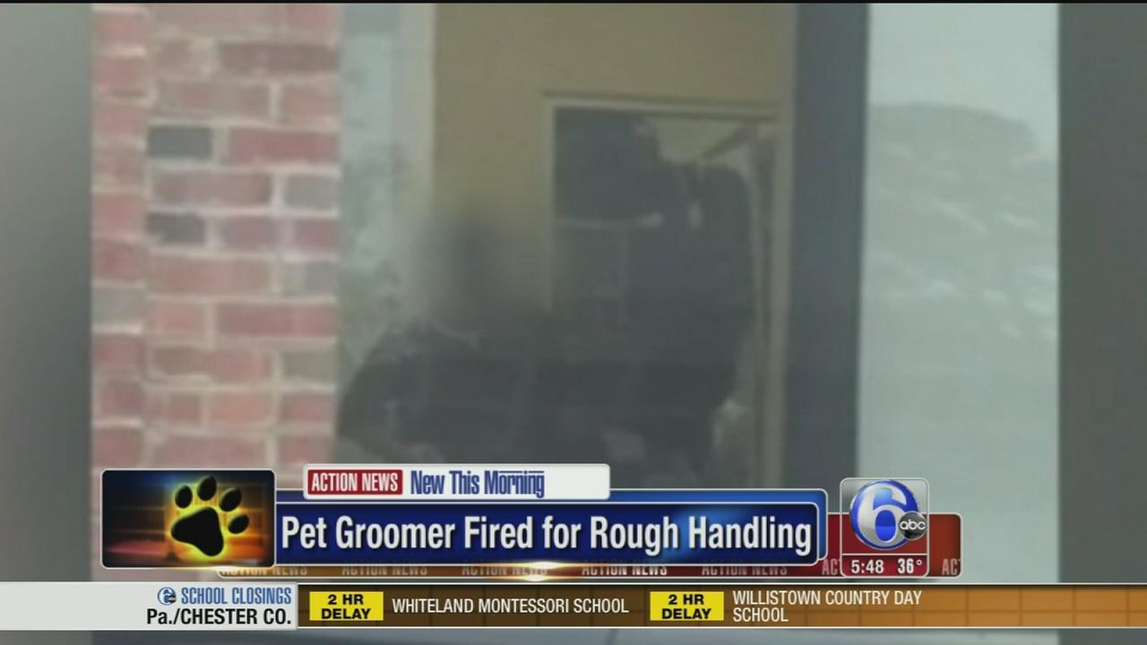 VIDEO: Pet groomer fired for rough handling