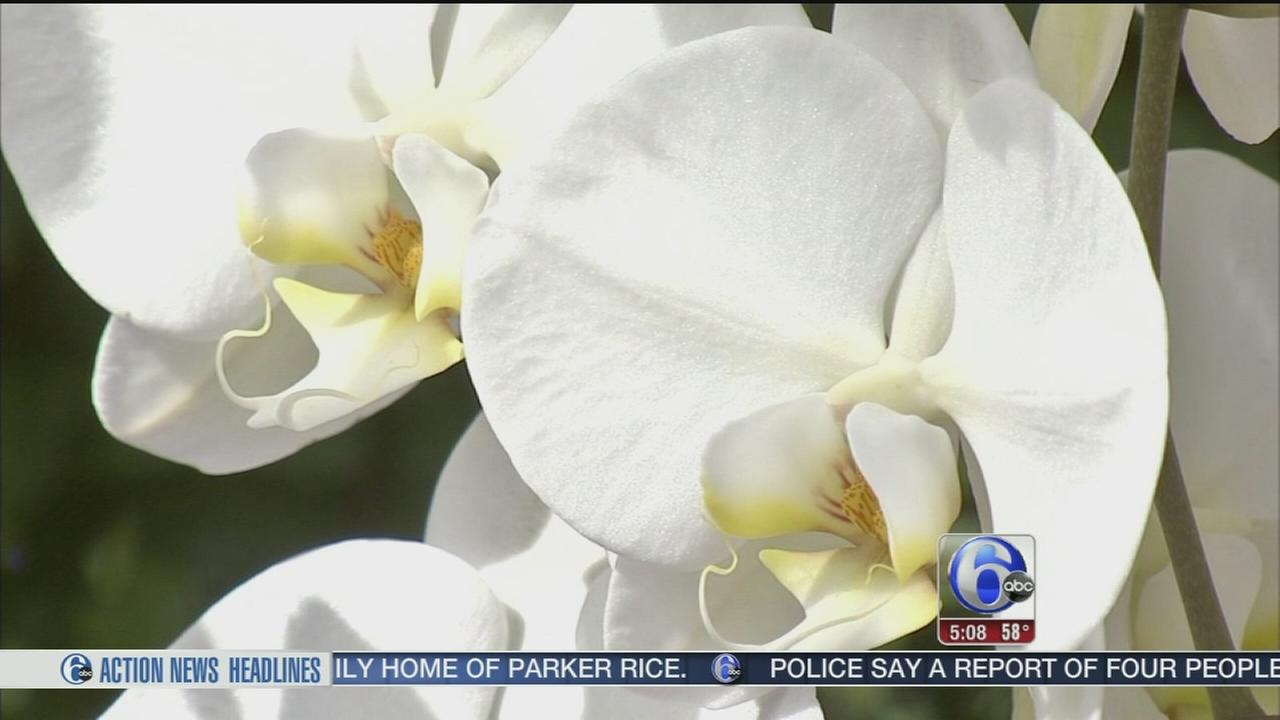 VIDEO: Signs of spring