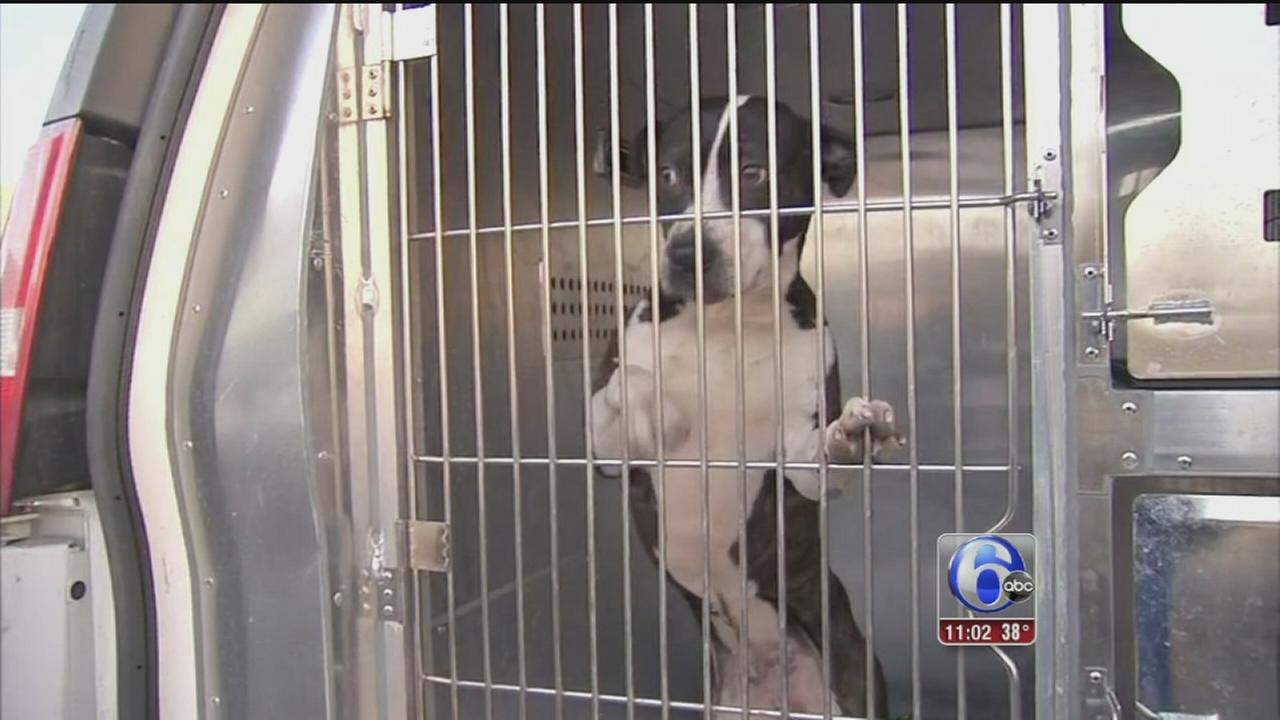 VIDEO: Woman, 2 children attacked by dog in NE Philly