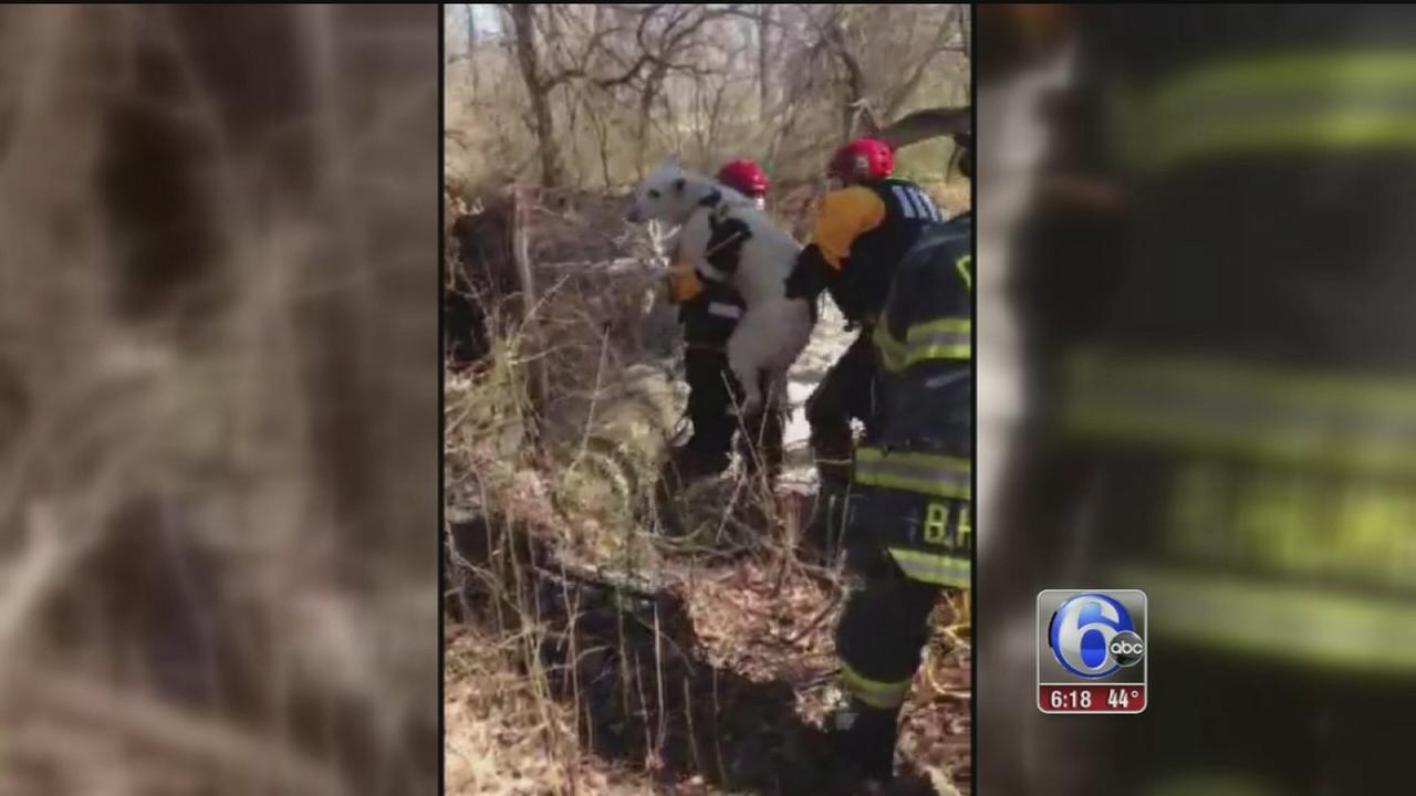 VIDEO: Crews rescue dog stuck in creek in Pemberton