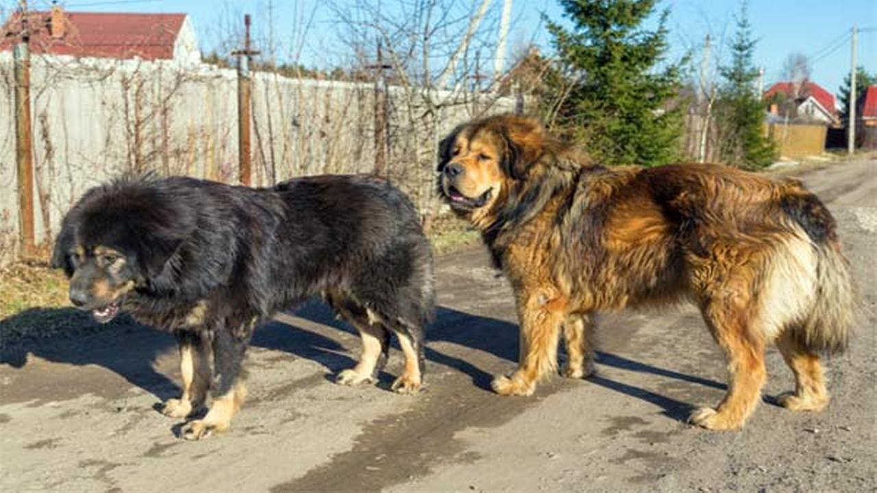 Couple win suit over constant barking dogs