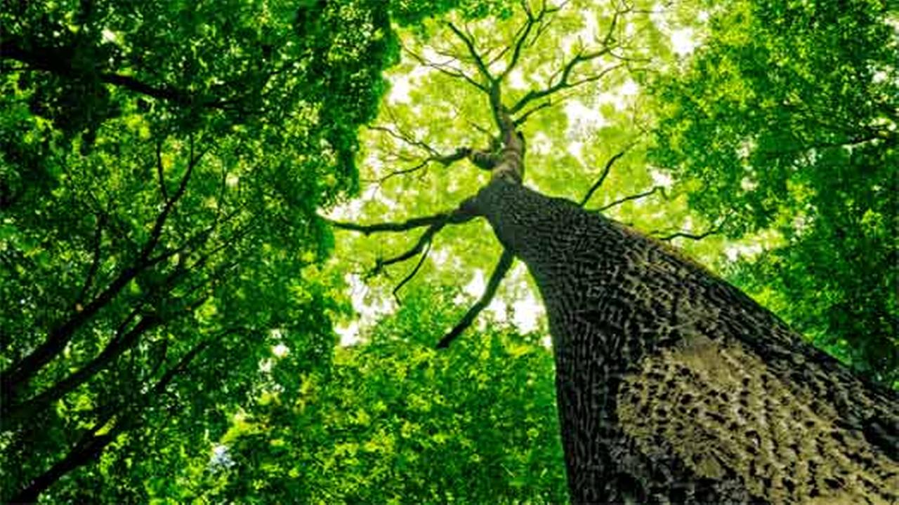 Police nab the elusive Tree Ninja
