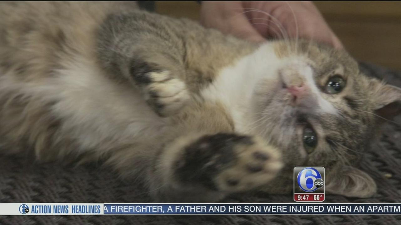 VIDEO: The Philly Kitty