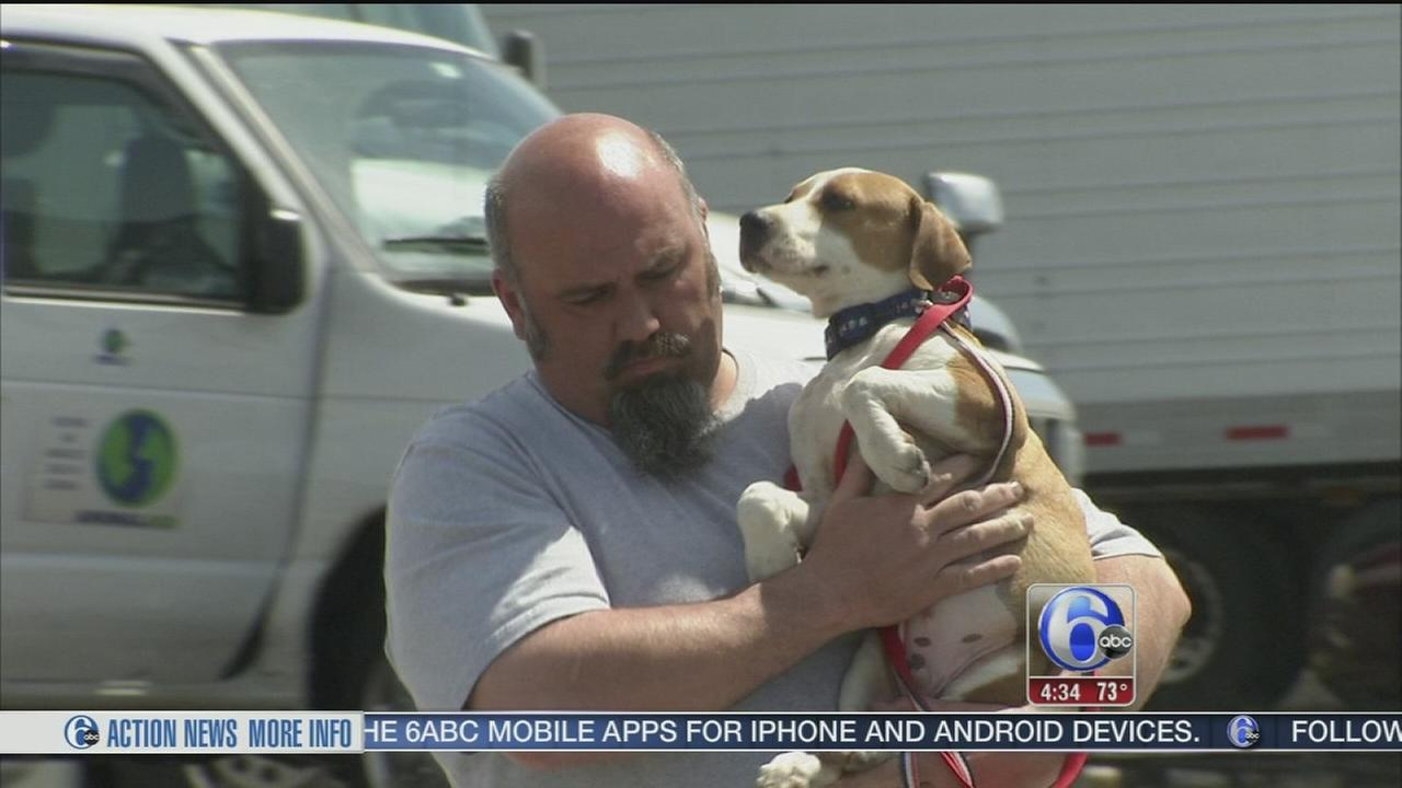 VIDEO: Rescued dogs from Puerto Rico arrive in Philadelphia