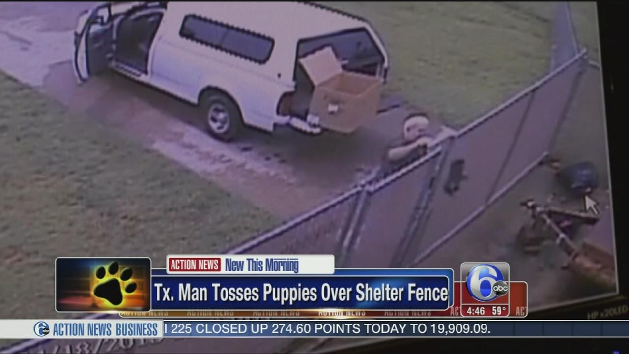 VIDEO: Man tosses helpless puppies over shelter fence