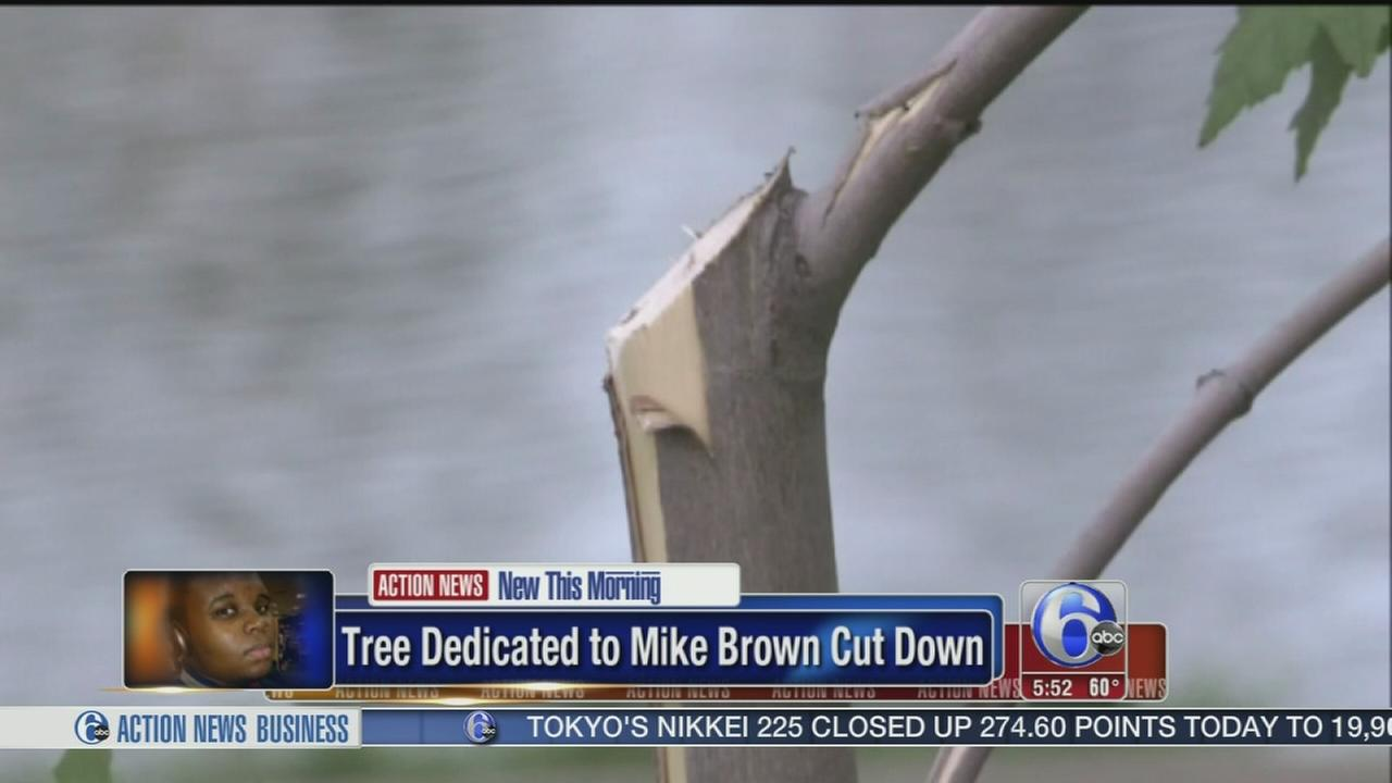 VIDEO: Tree planted in Michael Browns memory destroyed