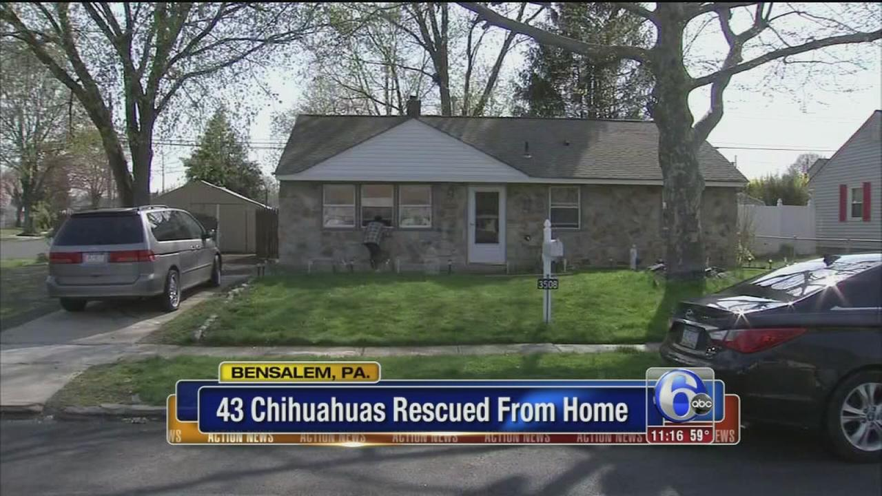 VIDEO: 43 dogs rescued from home
