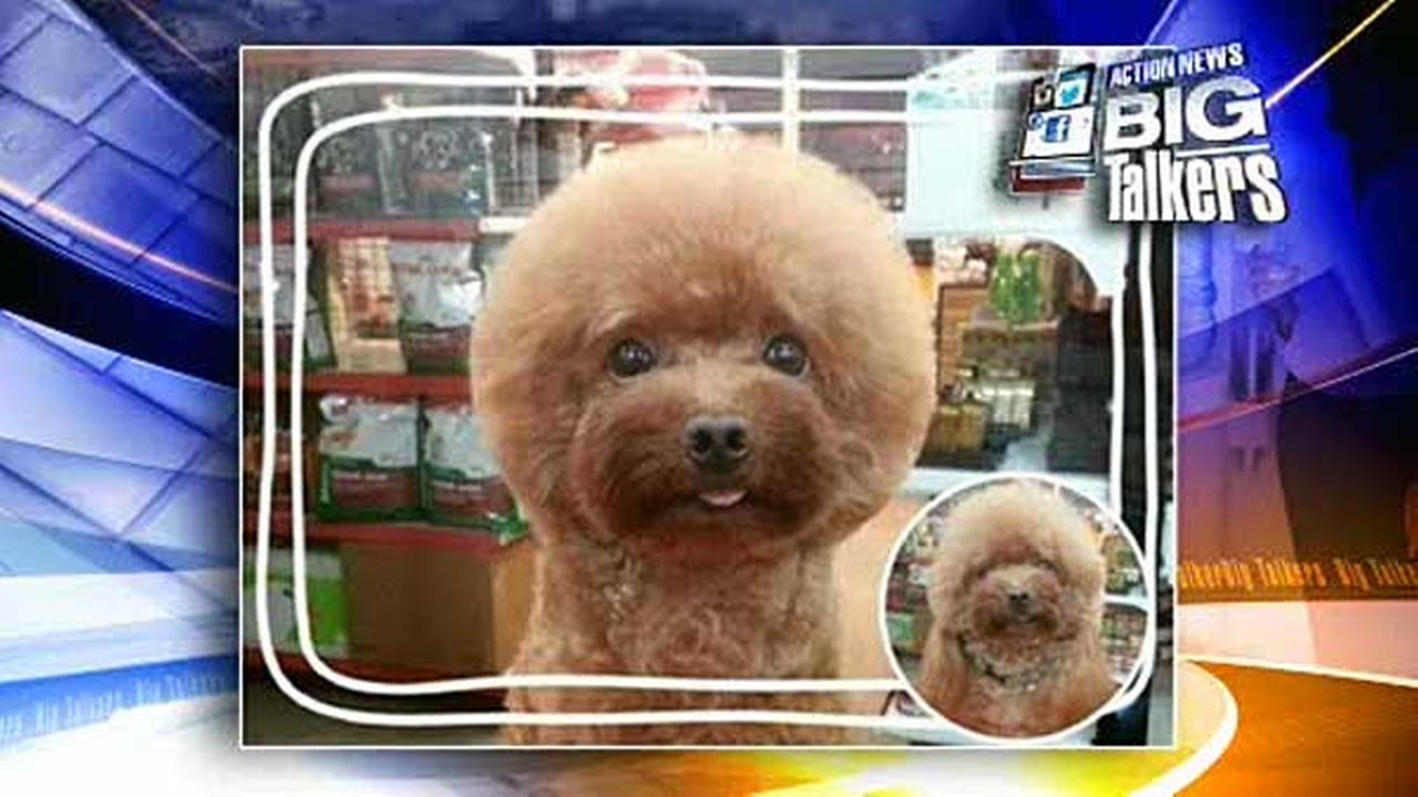 Does this haircut make me look round?  Thats the question surely being pondered by pooches all over Taiwan.