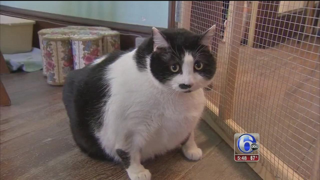 VIDEO: Local group helping cat get back into shape