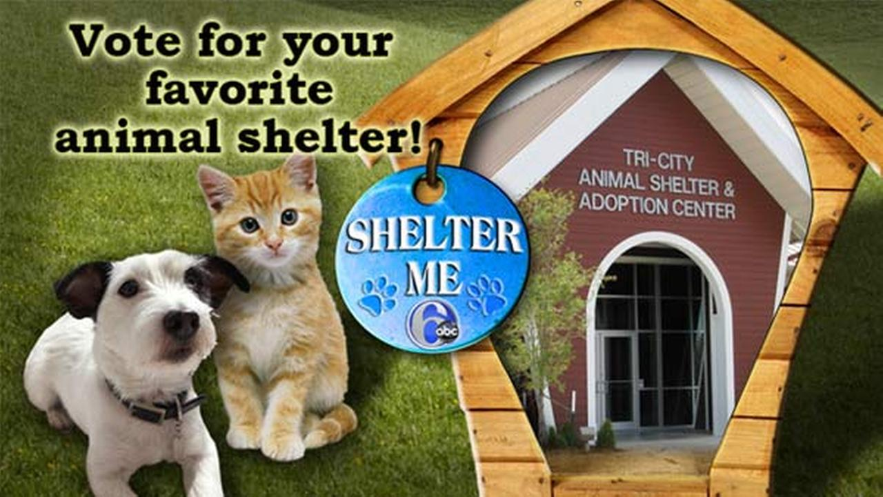 Vote for your favorite animal shelter on the Action News Facebook page!