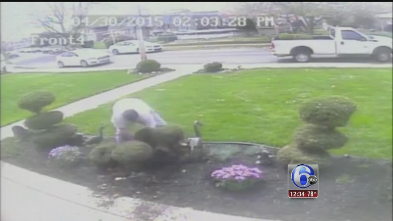 VIDEO: Arrest made in shrubbery theft