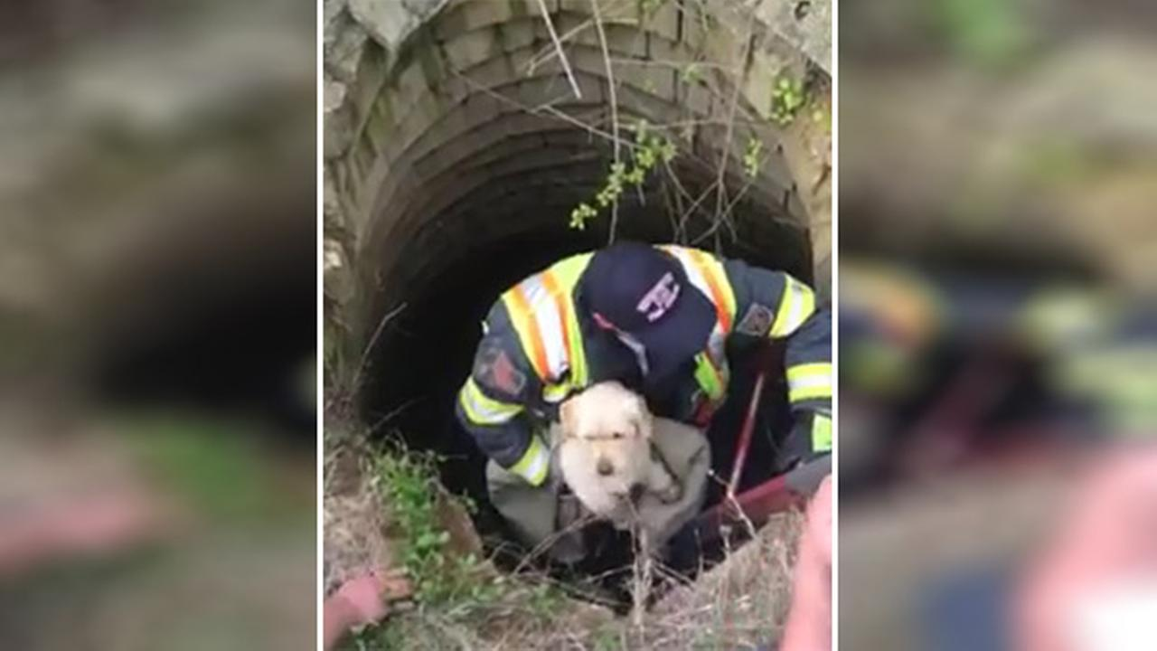 Dog pulled from abandoned well in Waterford Twp.
