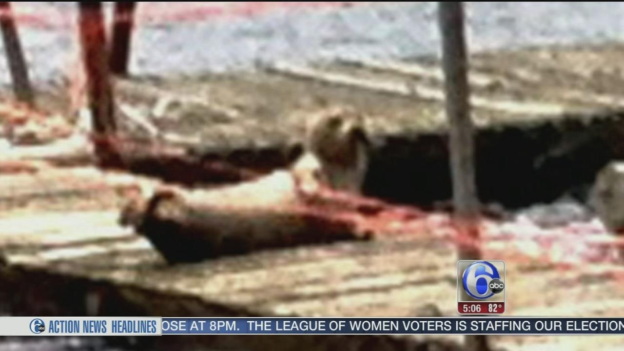 VIDEO: Seal spotted in Rancocas Creek