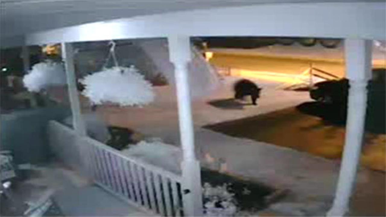 Bears seen roaming Berks Co. neighorhood