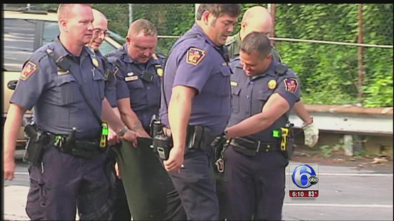 VIDEO: Bear captured in Allentown