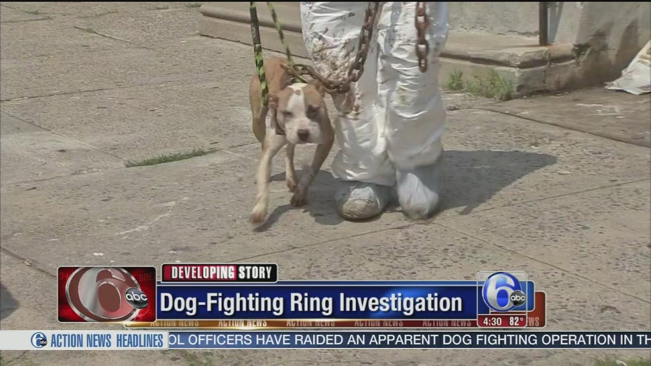 VIDEO: Dog-fighting ring investigation