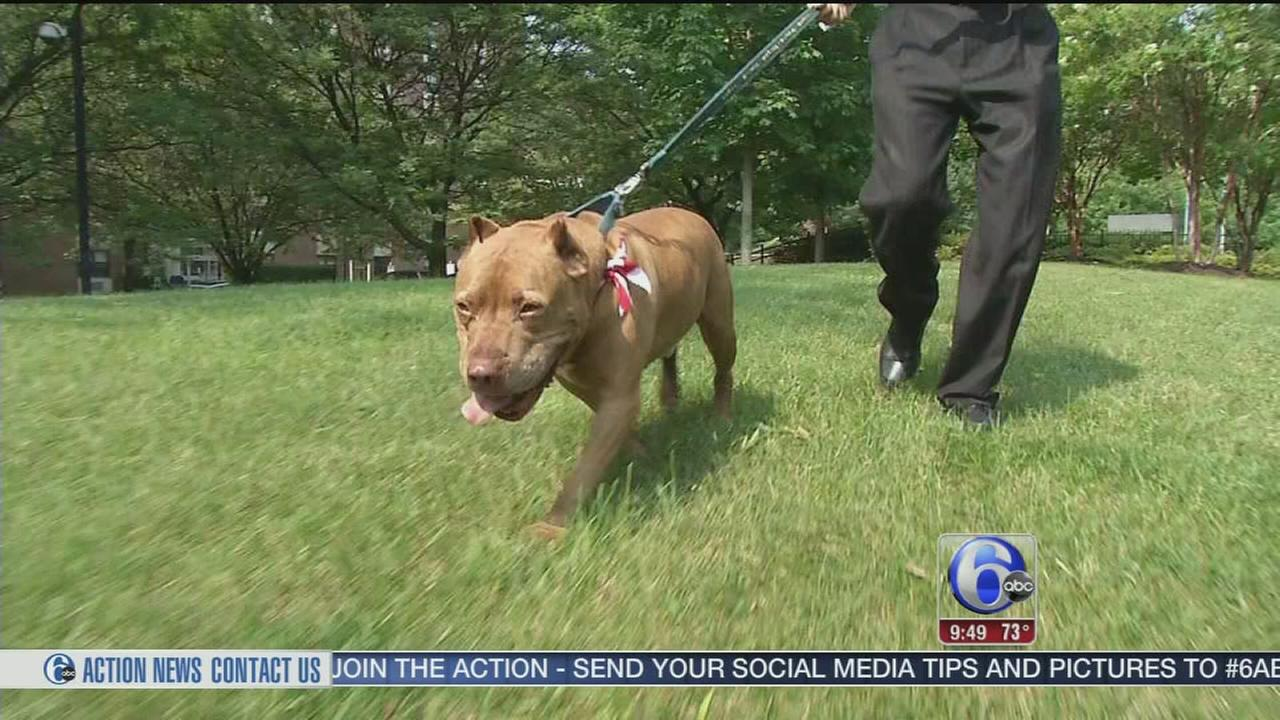 VIDEO: Shelter Me spotlights The Center for Animal Health and Welfare