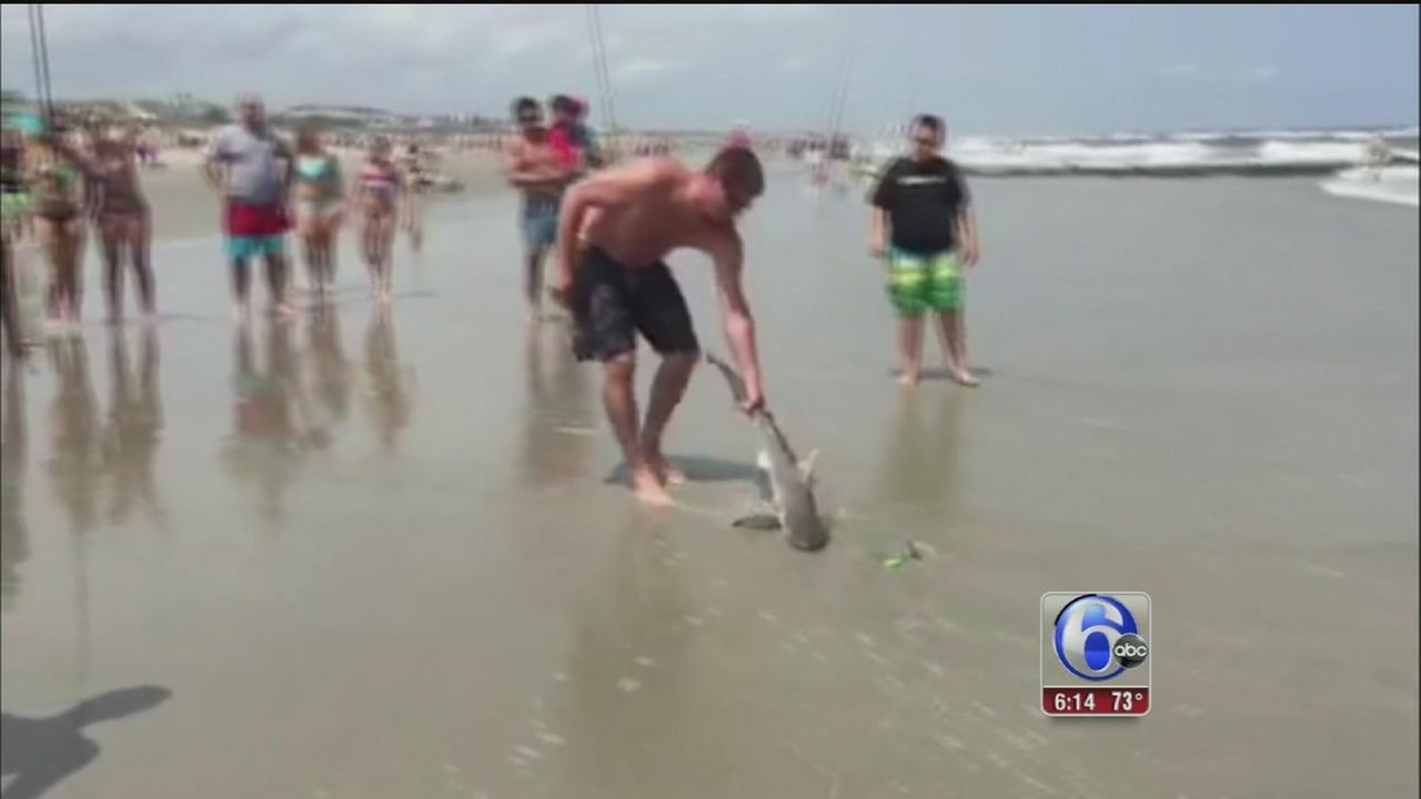 VIDEO: Swimmers catch small shark in Sea Isle City