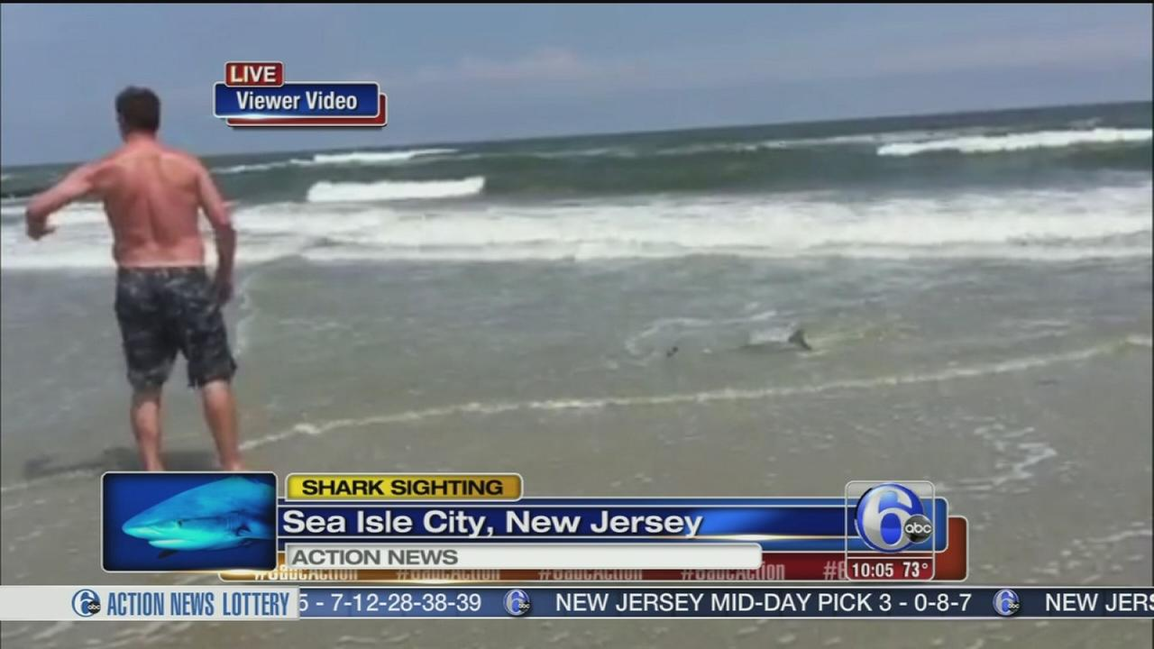 VIDEO: Small shark sighting in Sea Isle City