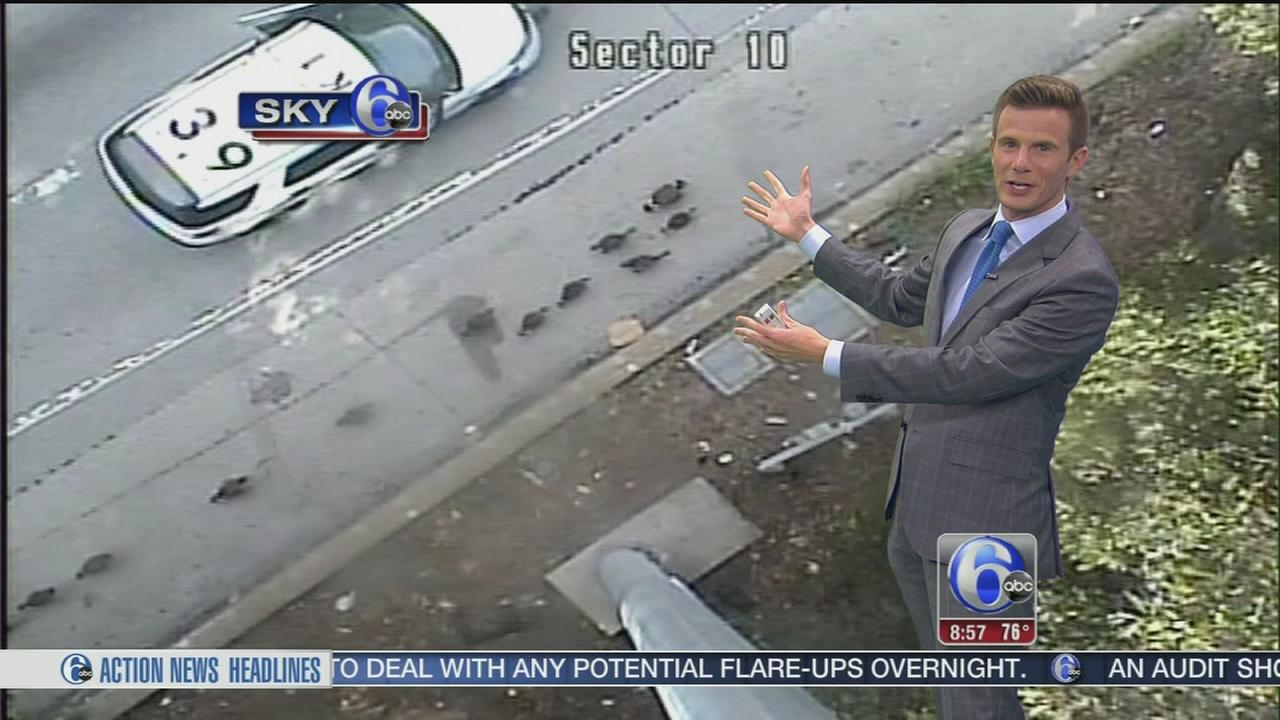 VIDEO: Geese take over I-76
