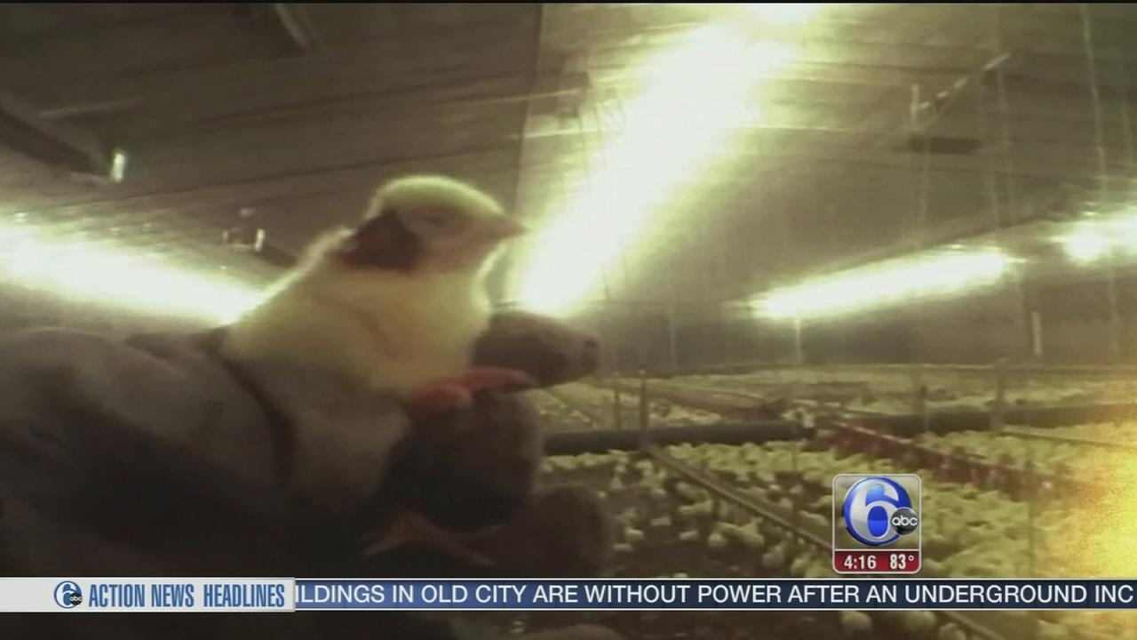 VIDEO: Tyson accused of abuse at Delaware poultry farm