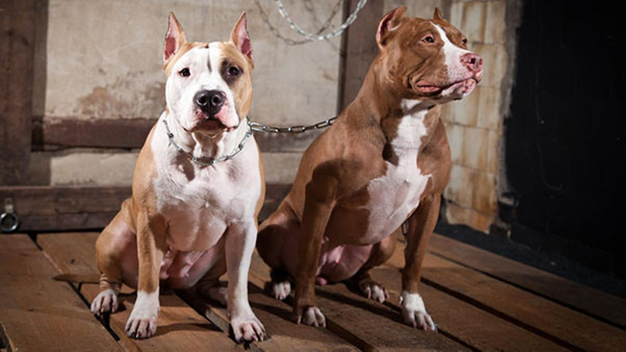 Wilmington lawmakers change law against pit bull owners