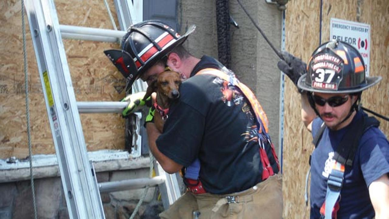 Firefighters rescue two dogs who were believed to have died in a fire in Chester County.