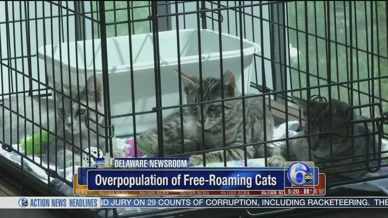 Efforts to reduce overpopulation of free roaming cats