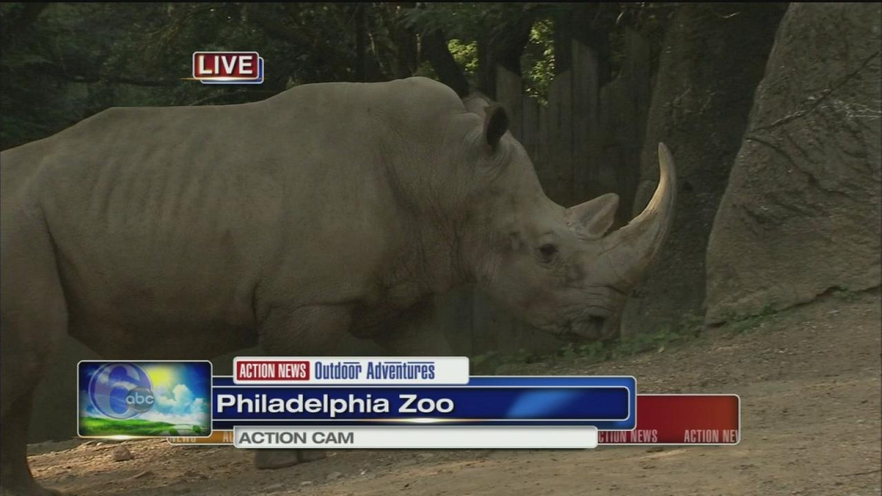 VIDEO: Cecily at the Zoo with Tony the Rhino