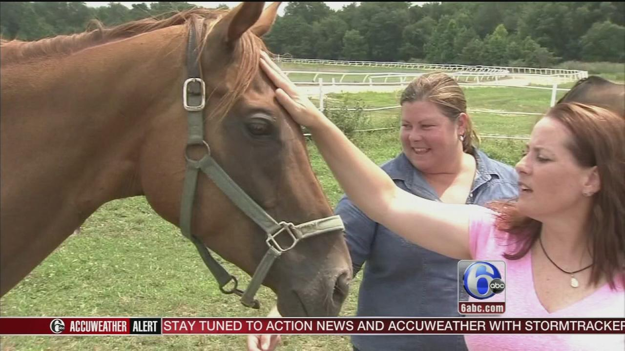 VIDEO: 33 horses recovering at New Jersey horse rescue