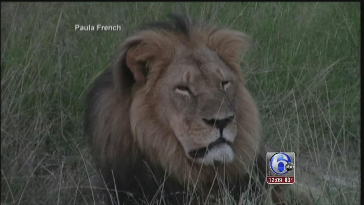 VIDEO: Hunter who helped kill Cecil the Lion makes court appearance